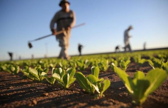 LaCollinaBio - Prodotti Biologici: Cos'è l'agricoltura biologica