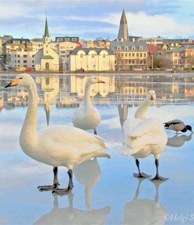 Reykjavik, Iceland., https://www.flickr.com/photos/helgi58/13902177792/