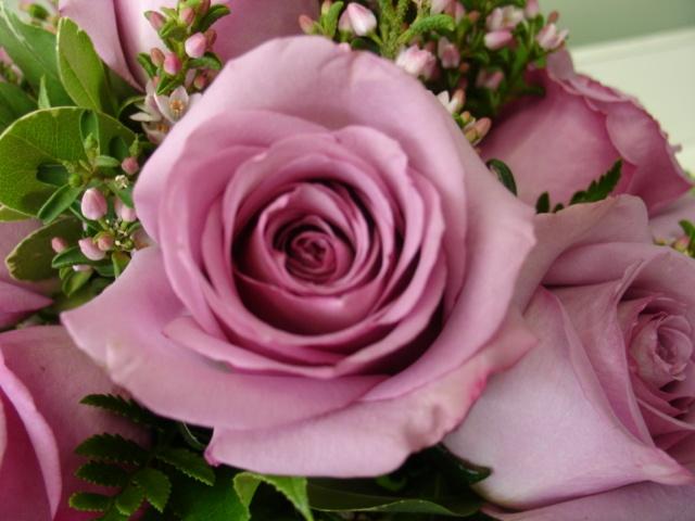 'Cool Water' Rose. www.scrimsflorist.com