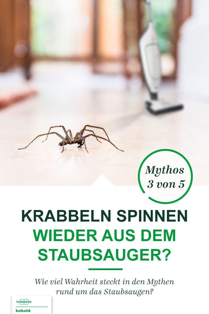 Können Spinnen Aus Dem Staubsauger Krabbeln