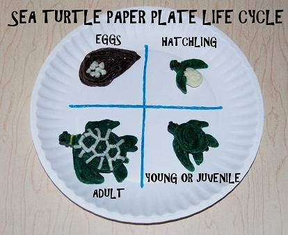 Sea Turtle Paper Plate Craft - Studying marine life is exciting for kids! Research tells us that kids who are exposed to nature and its inhabitants have a greater chance at becoming responsible adults who care for our Earth and its creatures. This summer, discover and explore the magnificent sea turtle with a Wikki Stix created version of the sea turtle's life cycle.