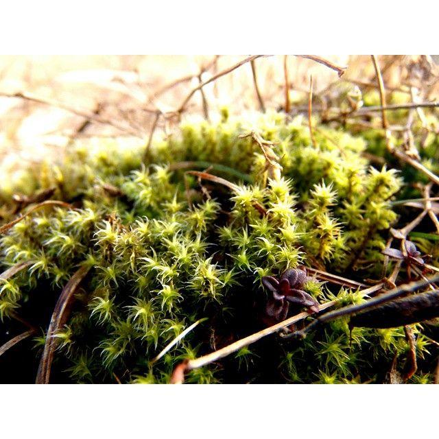 #nature #green#zielono#przyroda #Poland #instagood #instaphoto #bored@instanature_789#lubiepolske