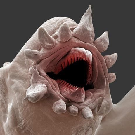 A monster? An alien? Nope, this is a macroscopic image of a Polychaete, or bristle worm. They can survive intense sea pressures and some live around deep sea vents, miles below the surface.