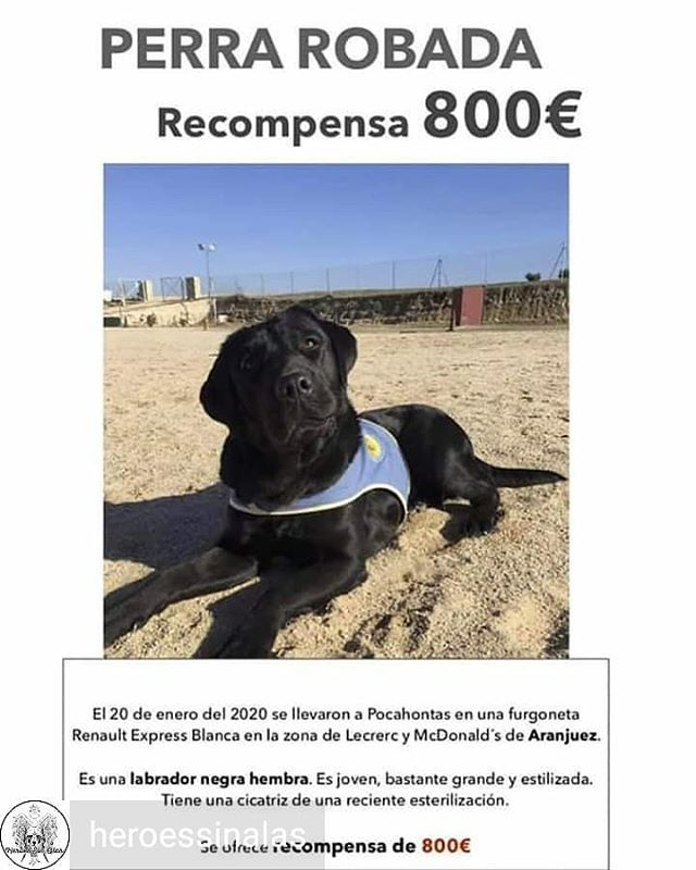 Pin On Adoptanocompres
