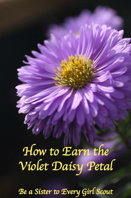 "Learn how to earn the Violet Daisy Girl Scout petal ""Be a Sister to Every Girl Scout""."