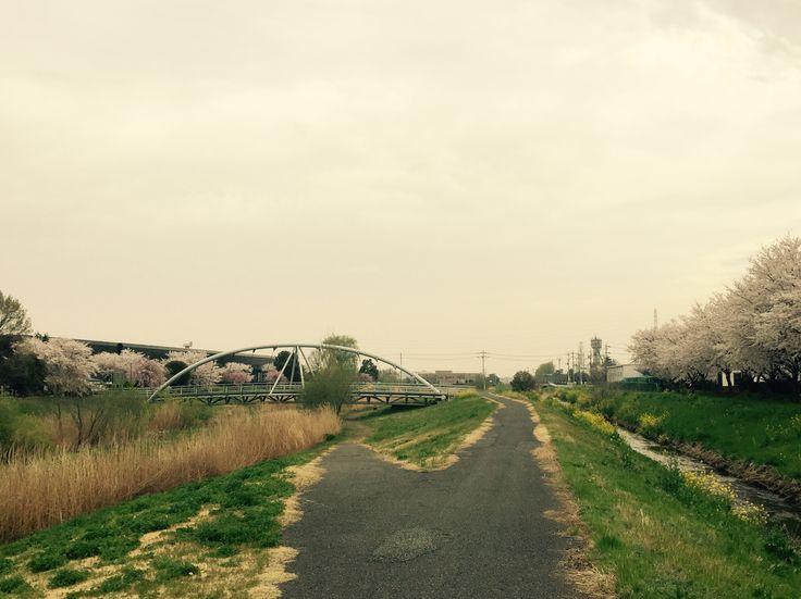 桜と橋とサイクリングロード