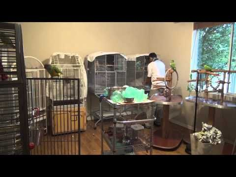 How To Be A Parrot Rescue Volunteer  - http://www.parrotshop.org/parrot-rescue-volunteer/