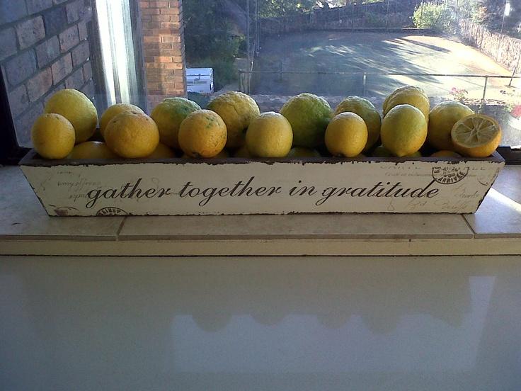 lemons in gratitude: Lemons, Creativity, Gratitude