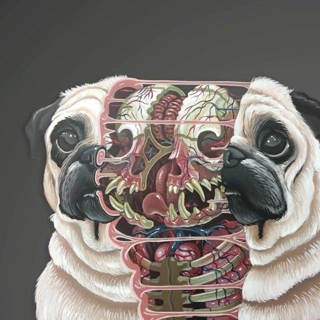 "9,161 kedvelés, 98 hozzászólás – Creep Machine Magazine (@creepmachine) Instagram-hozzászólása: """"Dissection of a pug"" by @nychos and animated by @serial_looper . #contemporaryart #anatomy #nychos…"""