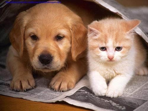 Adorable friends