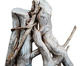 THE LION rustic wood sculpture  hand made Dionisio roots series