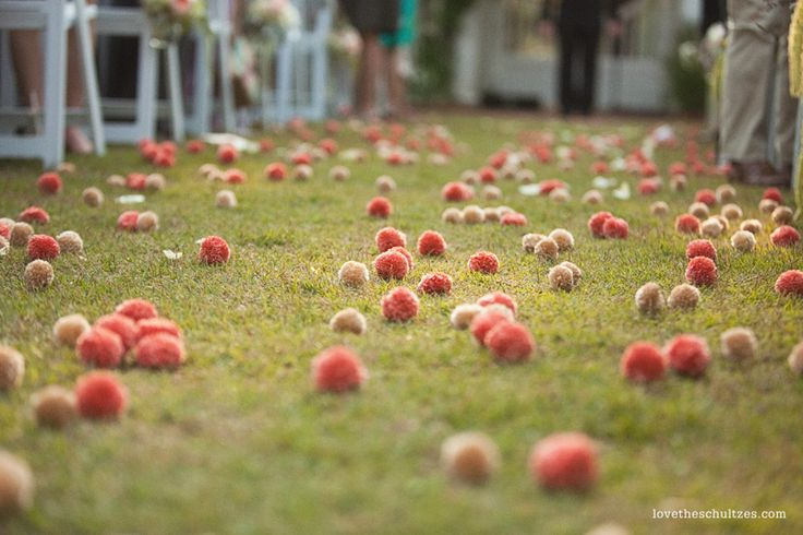 the guests threw pom poms as the couple exited the ceremony. adorable and different: Harmony Blog, Pompom Crafts, Flore Pompom, Wedding Blog, Tissue Pom Pom, Crafts Blog, 10 Ideas, Pom Pom Wedding, Aisle Decor