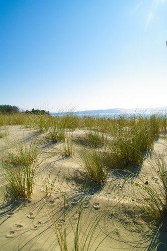 Pointe du Cap-Ferret et arrière plan sur la Dune du Pilat