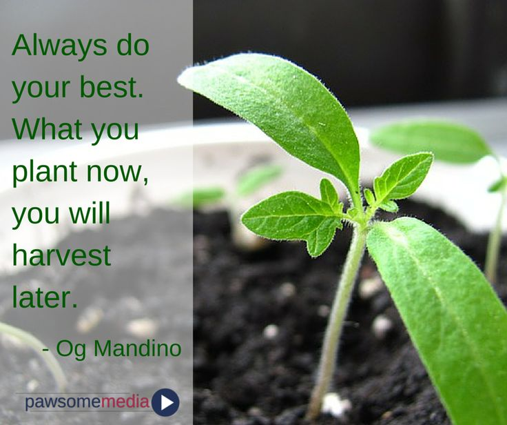 Always do your best...be aware of what you plant!