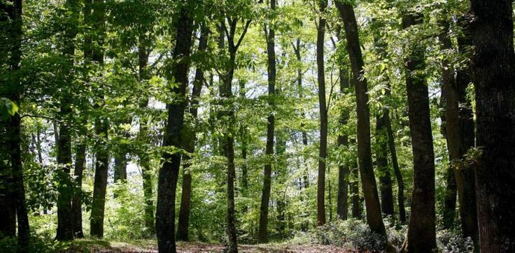 Une forêt.