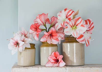 Amaryllis bloem flower pink art pinterest flower for Amaryllis deco