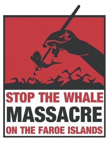STOP WHALE MASSACRE ON THE FAROE ISLANDS!