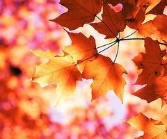 foliage: Nature, Autumn, Seasons, Color, Fall, Posts, Leaves, Photography