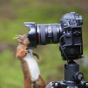 Ein Eichhörnchen macht Fotos.