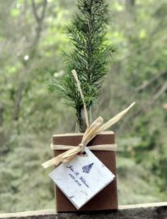 Let The Legacy Continued With A Memorial Tree