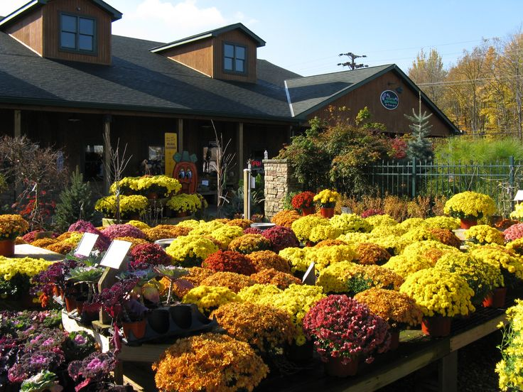 10 best nurseries and garden centers ohio images on pinterest babies nursery baby rooms and for Maria s garden center