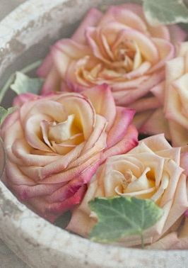 These pastel pink and yellow roses are too pretty.