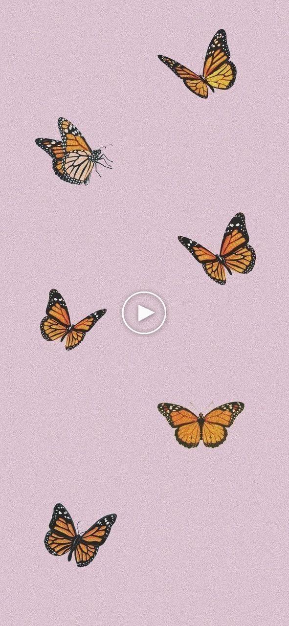 Pinterest Macy Willcutt Tumblrwallpapers Wallpapers Lockscreen Butterfly Wallpaper Iphone Art Wallpaper Iphone Butterfly Wallpaper
