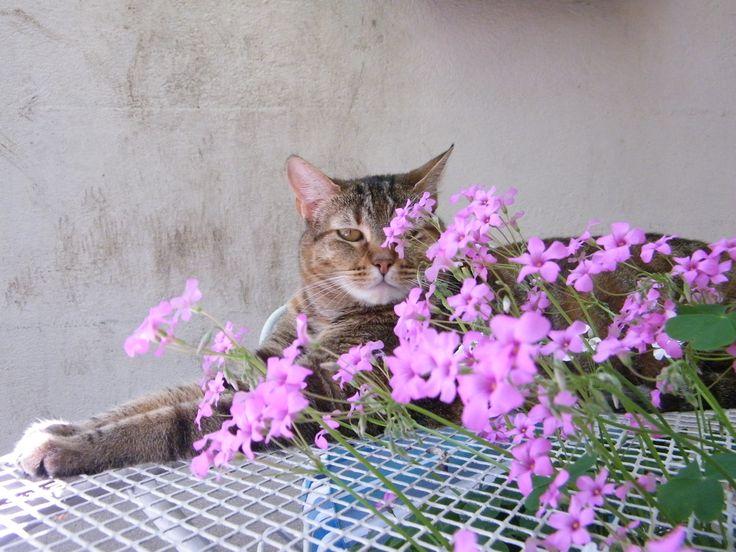 trébol en flor