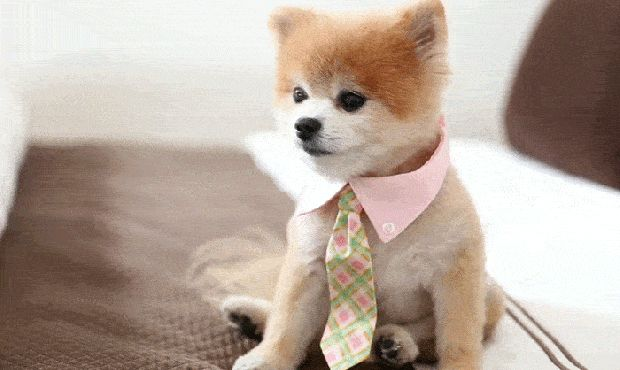 Pick Your Favourite Puppy, And We'll Give You A Boyfriend