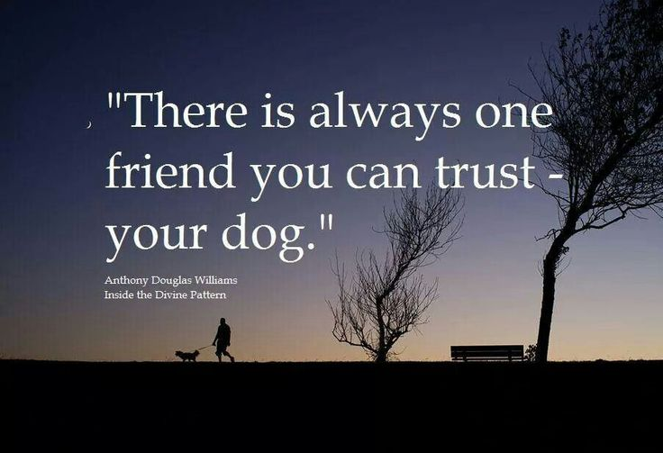 There is always one friend you can trust....your dog.