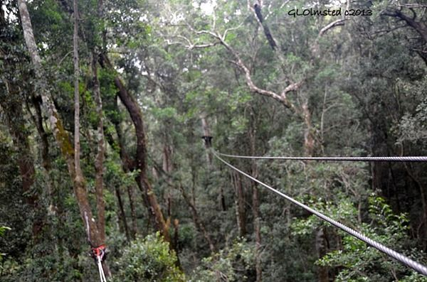 Tsitsikamma Canopy Tour offers a chance to slide through the tree tops. geogypsytraveler.com