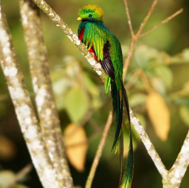 foto de quetzal6.jpg (603×600)