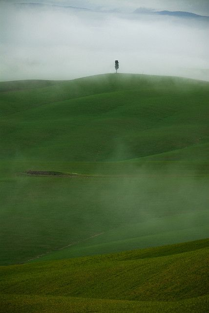♂ Misty green nature solitude tree Landscape - Tuscany - Cypress fog by Enzo Trberi