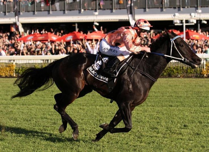 Unbeaten champion Black Caviar has been inducted into the Australian Racing Hall of Fame. She joins Sunline as the only horse to be inducted whilst still racing. Go BC! 23d Feb 2013