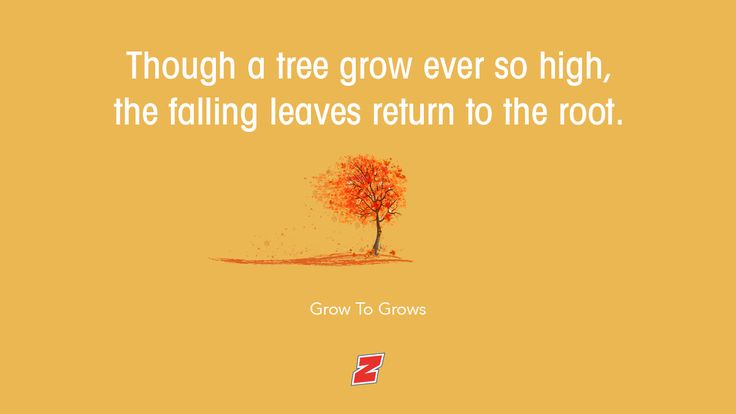 The leaves returns to the root!  #crazyquote #qotd