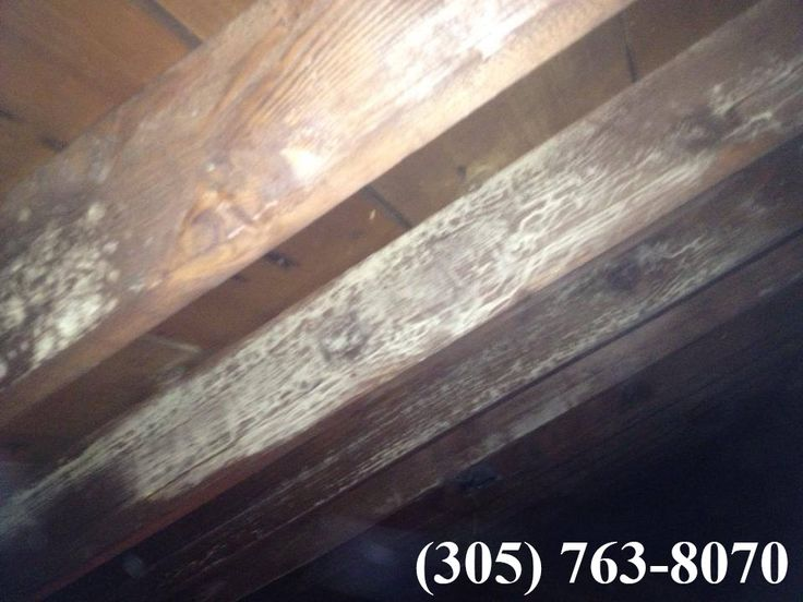 If you suspect fungus is present, we'll test for mold. The examination will provide valuable information, including the type of the mold and the extent of the infestation.  More Details: http://miamimoldspecialist.com/