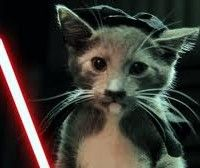 http://brandlove.co.za/video-jedi-kittens-strike-back-by-finalcutking/