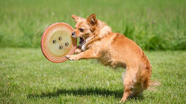 Your Overweight Dog Lose Weight With Us - http://www.dog-ramblers.co.uk/dog-boot-camp/