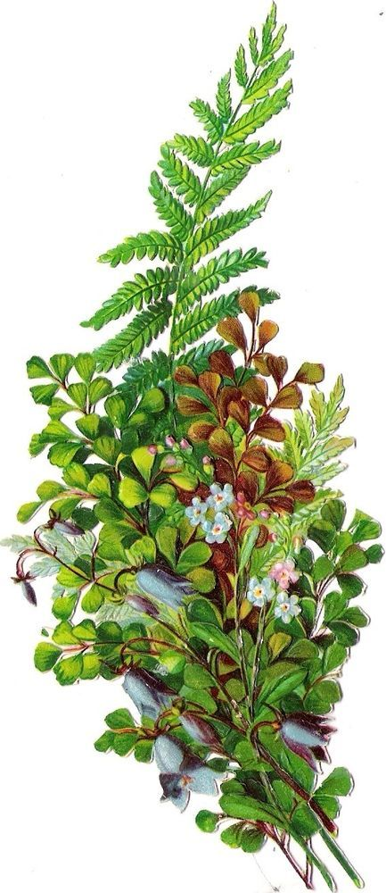 Oblaten Glanzbild scrap die cut chromo  Glocken Blume Farn 17cm fern plant
