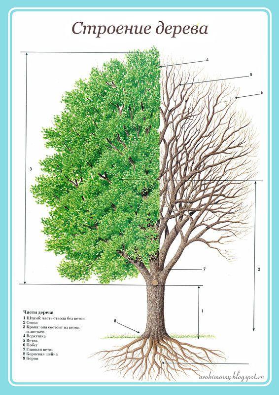 тематическая неделя деревья