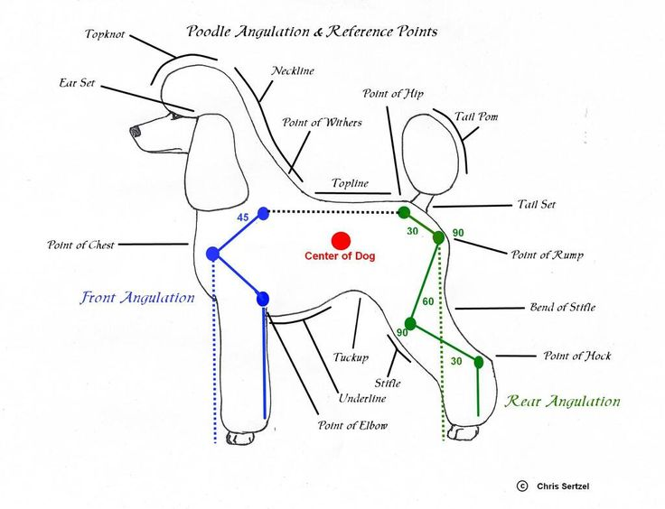diagram for standard poodle face clipping - Google Search                                                                                                                                                      Más                                                                                                                                                                                 More