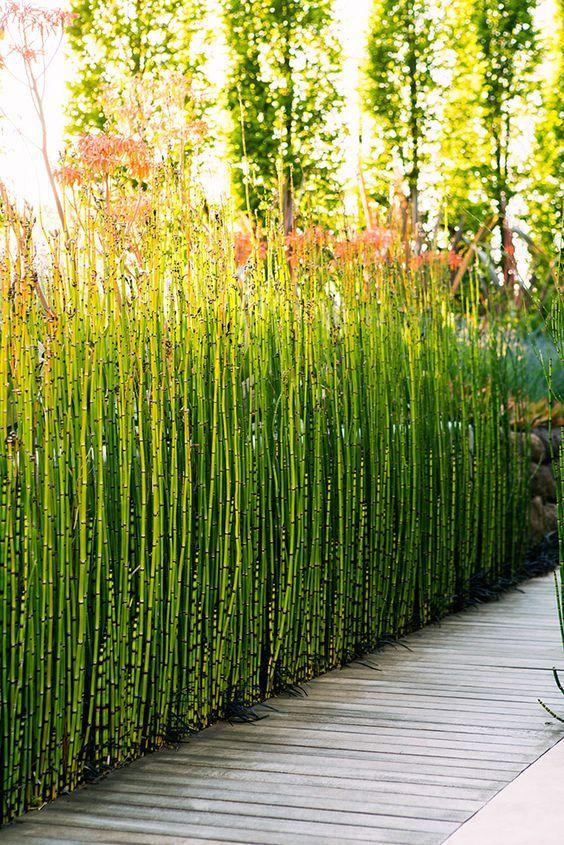 891 best garden border ideas images on pinterest beautiful gardens 24 surprising plant combos flowerbed ideasbog plantsgardening toolsflower gardeningborder workwithnaturefo