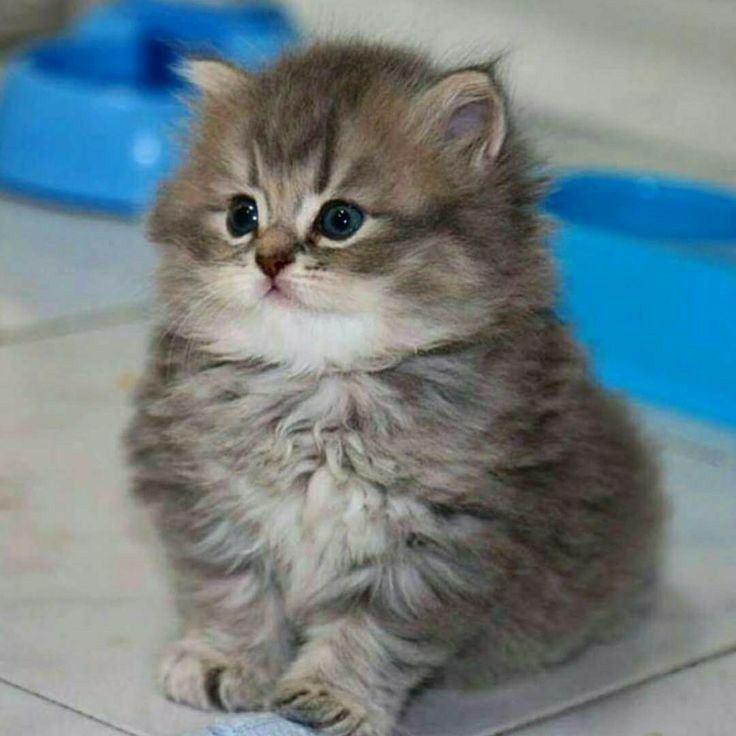 So Cute Kittens Cutest Cats And Kittens Baby Cats