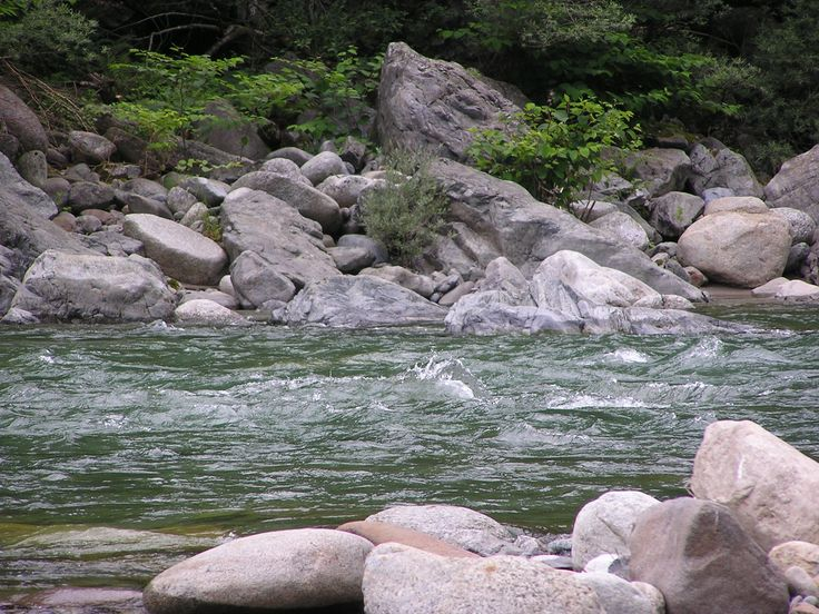 31 best images about sockeye salmon on pinterest for Best bait for salmon fishing in the river