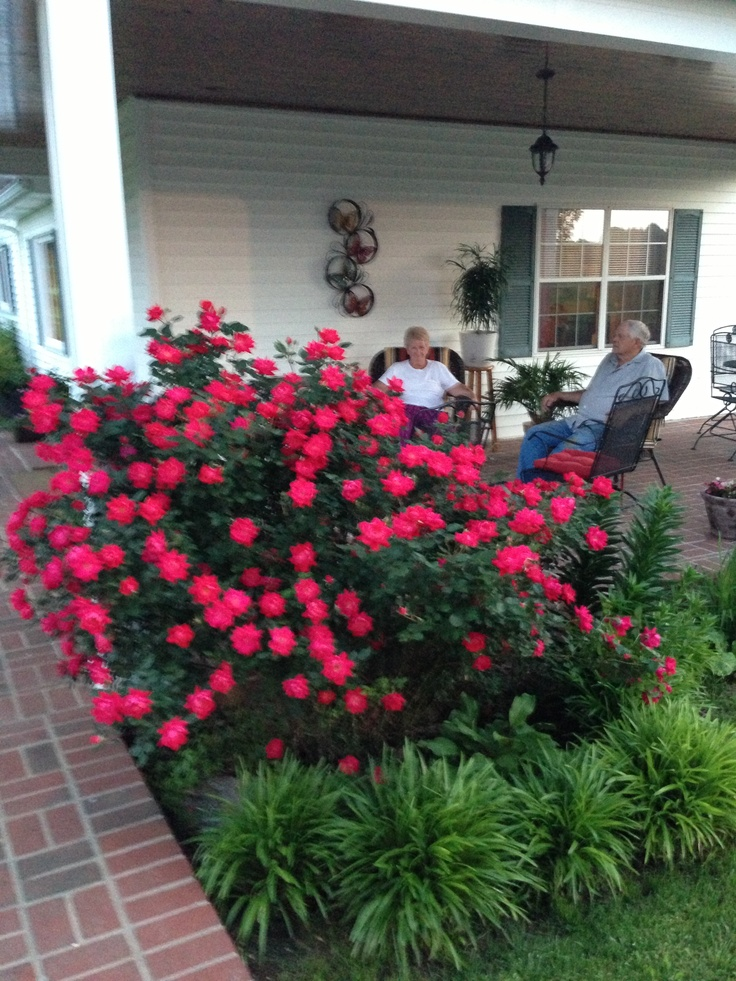 red knock out roses - Flower Garden Ideas With Roses