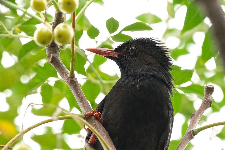 A black bird.
