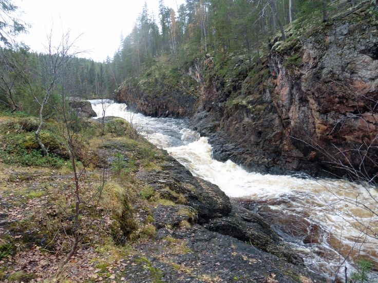Kuusamo, Oulanka. Könkään Keino, 8 km lång vandringsled i Oulanka nationalpark. Skummande vattenfall Kiutaköngäs.