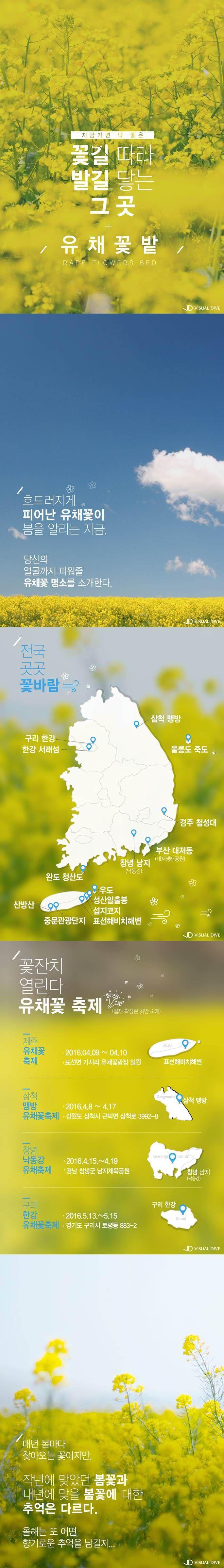 노란 봄이 피었다… 전국 유채꽃 명소 소개 [카드뉴스] #flower / #cardnews ⓒ 비주얼다이브 무단 복사·전재·재배포 금지