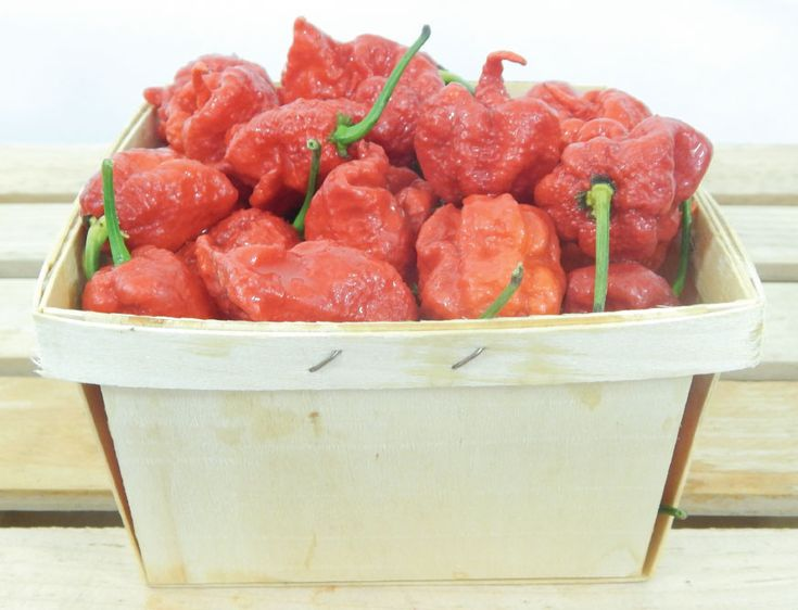 Carolina Reaper Pepper Plants