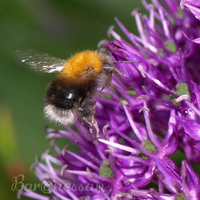 Mot maten! #garden #trädgård #nature #insects #flowers #blommor